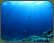Marine Squalene