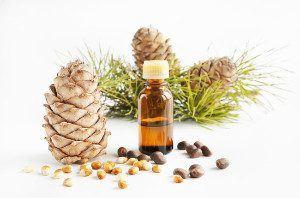 cedar-wood-nuts-and-oil