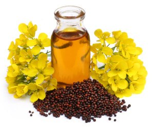 mustard oil seed and flower