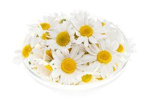 Bowl of roman chamomile flowers