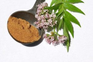 A scoop of valerian powder with a some valerian flowers.