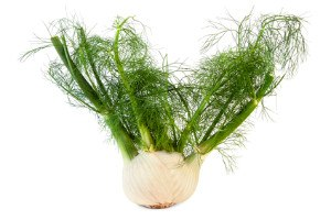 A bulb of fennel with feathery leaves.