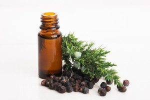 A bottle of juniper essential oil with juniper berries and leaves.