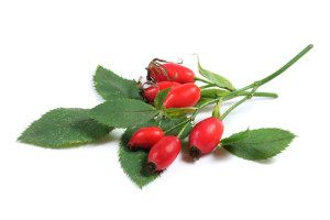 A sprig of rosehip berries and leaves.
